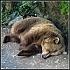 Obrázek uživatele Medvěd
